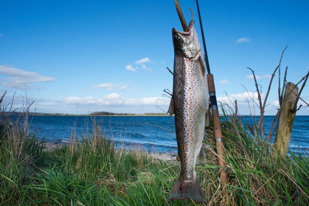 Havørredfiskeri på Sydfyn