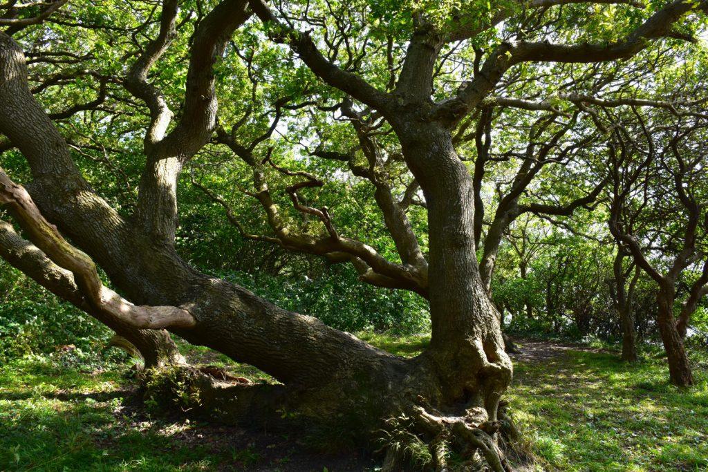 Præstens Skov på Sydfyn