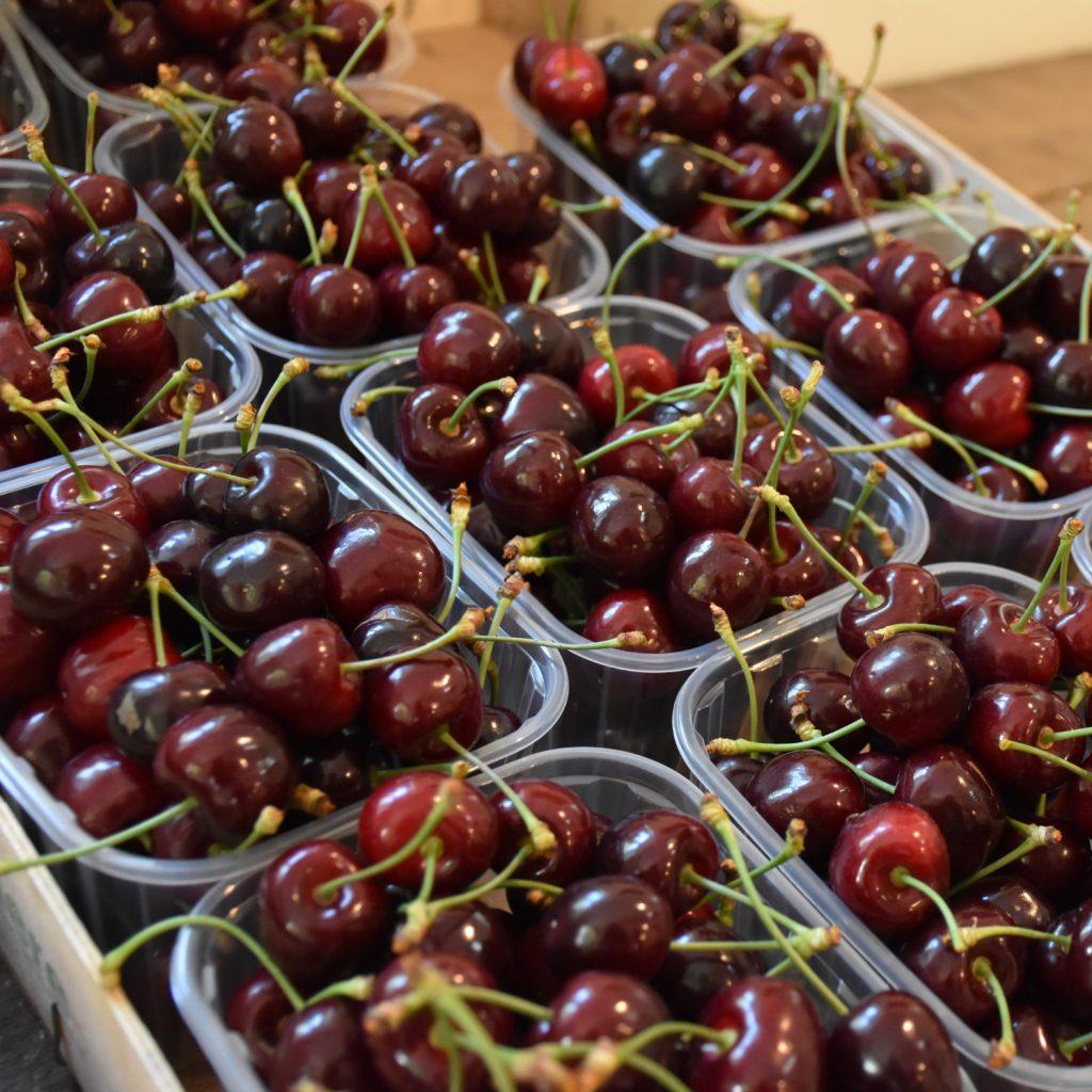 De bedste kirsebær på Langeland