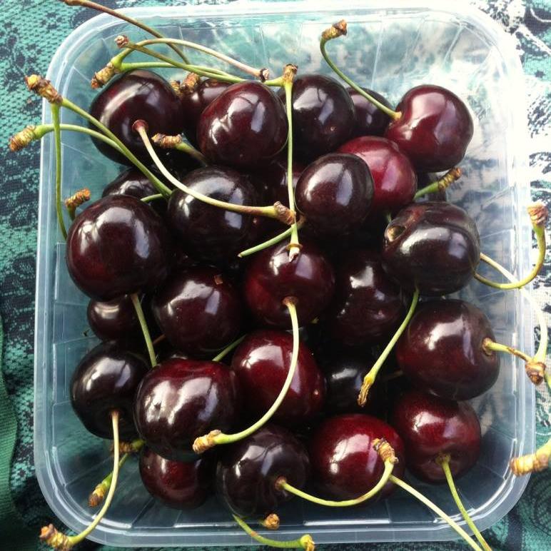 Kirsebær til turen ud på Langeland