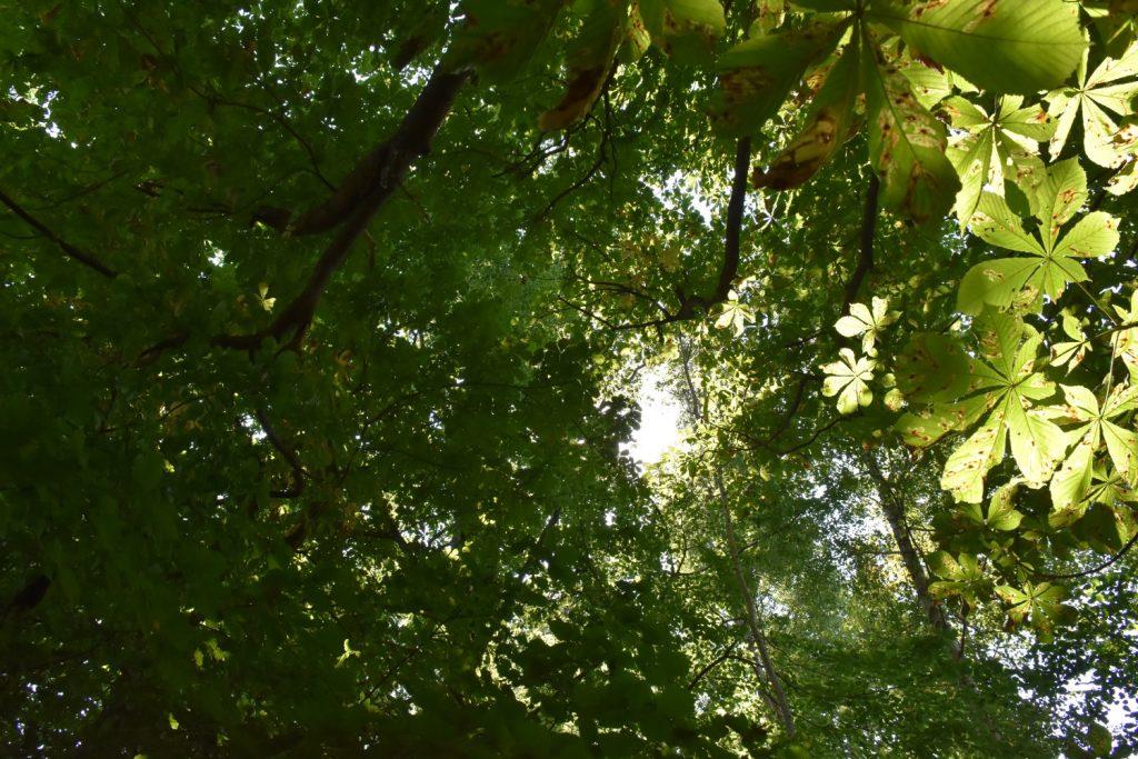 Sol gennem trækronerne