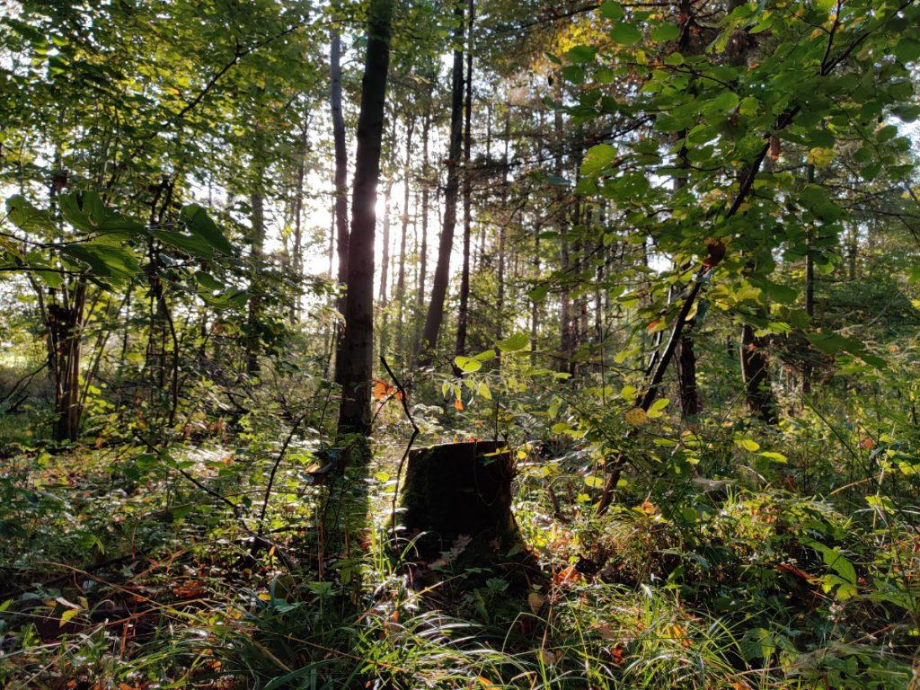 Svampetur i Rantzausmindeskoven