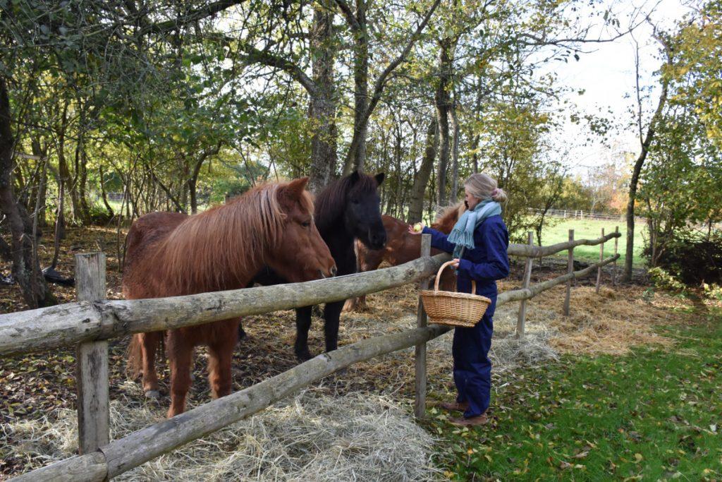 Berit hos hestene