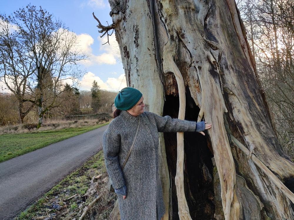 Det hule poppeltræ på Tåsinge