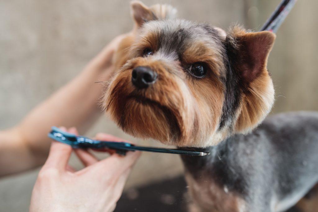 Hundesalon på Sydfyn