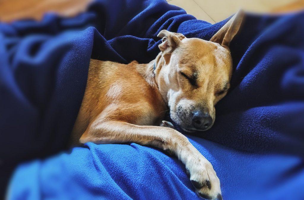 Hundemassage på Sydfyn