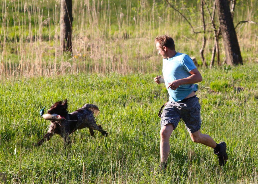 Hundetræning på Sydfyn