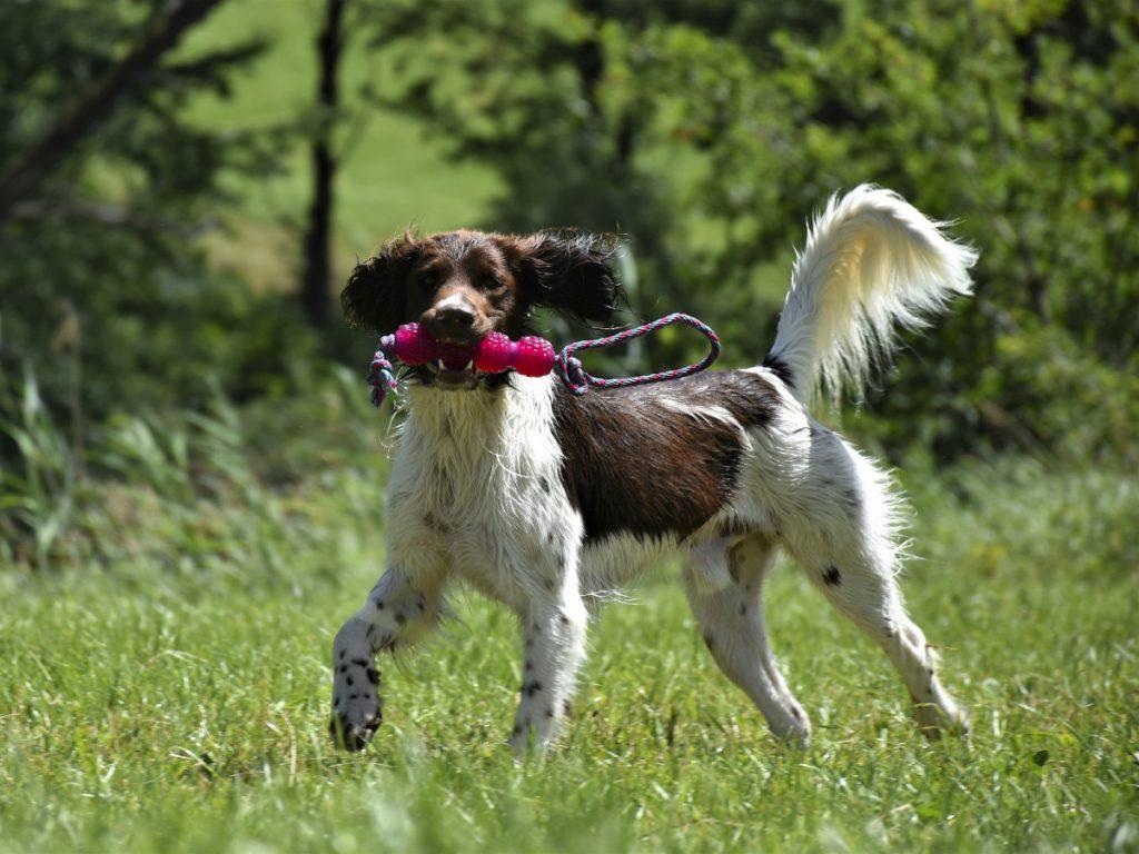 Hundetræning på Sydfyn og øerne