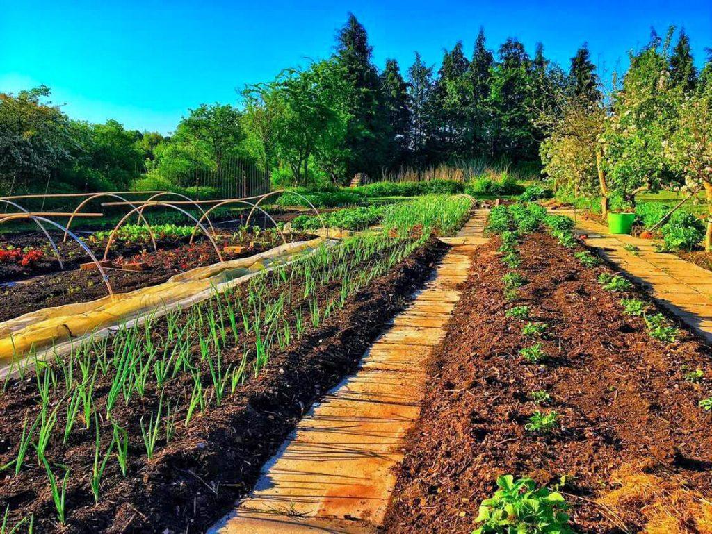 Afgrøder på Abildgård
