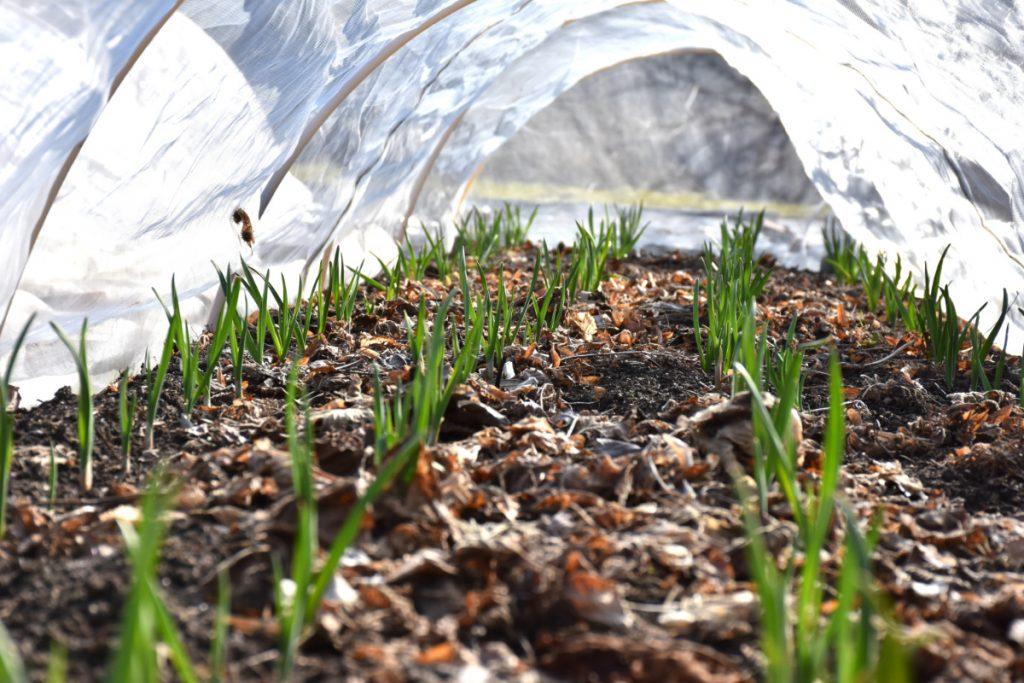 No nonsense gardening på Sydfyn